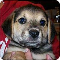 Adopt A Pet :: Lexus - Portland, OR