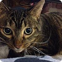 Adopt A Pet :: Natasha - Byron Center, MI