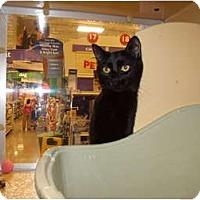 Adopt A Pet :: Harmony - Vails Gate, NY