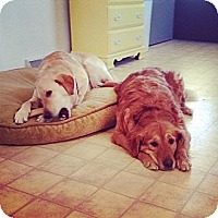 Adopt A Pet :: Sadie & Stella - White River Junction, VT