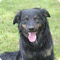 Adopt A Pet :: Teddy - Pittsburg, KS