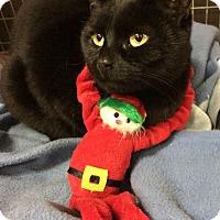 Adopt A Pet :: Riatta - Winchendon, MA