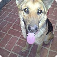 Adopt A Pet :: Jen - El Paso, TX