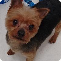 Adopt A Pet :: Sonic - Edmonton, AB