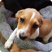 Adopt A Pet :: Andrew - Aurora, CO