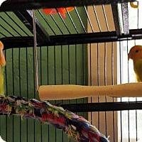 Adopt A Pet :: BONNIE & CLYDE - DeLand, FL