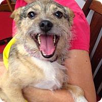 Adopt A Pet :: Pumpkin - Allentown, PA