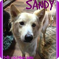 German Shepherd Dog Mix Dog for adoption in Sebec, Maine - SANDY