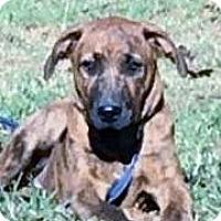 Adopt A Pet :: Spice meet me 12/2 - Manchester, CT