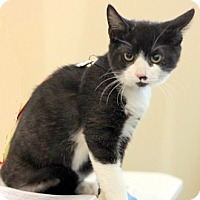 Adopt A Pet :: Candy - Concord, NC