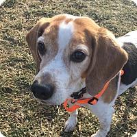 Adopt A Pet :: Texas - Grayslake, IL