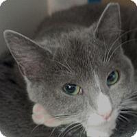 Adopt A Pet :: Stacy - Redwood City, CA
