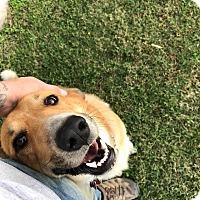 Adopt A Pet :: Murph - Springfield, MO