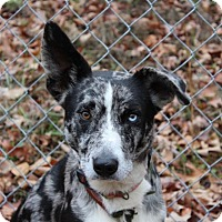 Adopt A Pet :: Zeke - Hagerstown, MD