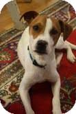 Terrier (Unknown Type, Medium)/Setter (Unknown Type) Mix Dog for adoption in Homewood, Alabama - Benji