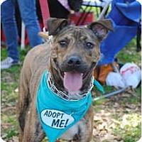 Adopt A Pet :: Tigger - Los Angeles, CA