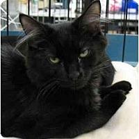 Adopt A Pet :: Rachel6 - Plainville, MA