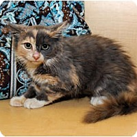 Adopt A Pet :: Isabel - Farmingdale, NY