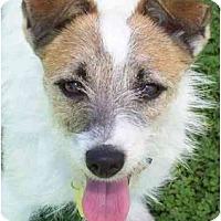 Adopt A Pet :: JAYDA - Phoenix, AZ