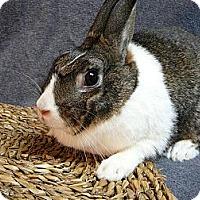 Adopt A Pet :: Skylar - Newport, DE