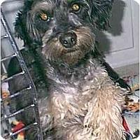 Adopt A Pet :: Marcus - dewey, AZ