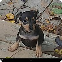 Adopt A Pet :: Dalton - Hilliard, OH