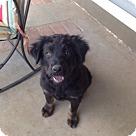 Adopt A Pet :: Jasmin