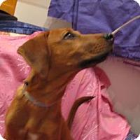 Adopt A Pet :: Pumpkin - Murphy, NC