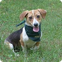 Adopt A Pet :: Katie - Mocksville, NC