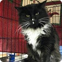 Adopt A Pet :: Max (Maxine) - Logan, UT
