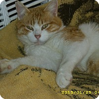Adopt A Pet :: PUMPKIN - Brea, CA