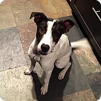 Adopt A Pet :: Monty - West Hartford, CT