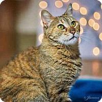 Adopt A Pet :: EMMA - Carlsbad, CA