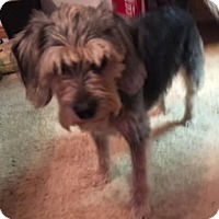 Adopt A Pet :: Clair-pending adoptio - Manchester, CT