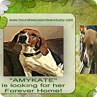Adopt A Pet :: AMY KATE - Findlay, OH