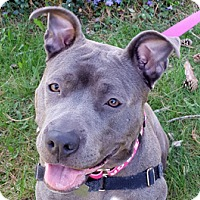 Adopt A Pet :: Grace - Framingham, MA