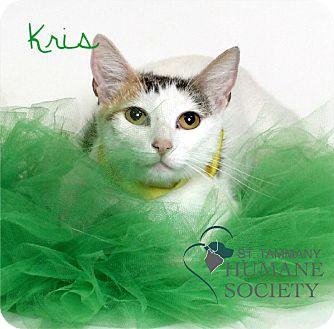 Domestic Shorthair Cat for adoption in Covington, Louisiana - Kris