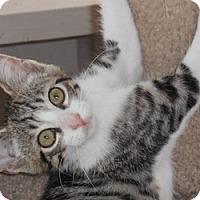 Adopt A Pet :: Renshire - North Highlands, CA