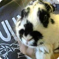 Adopt A Pet :: *JUJU - Sacramento, CA