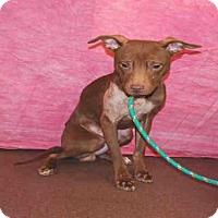 Adopt A Pet :: COMET - Louisville, KY