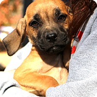 Adopt A Pet :: Rico - Glastonbury, CT