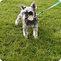 Adopt A Pet :: Dazzle - E. Wenatchee, WA