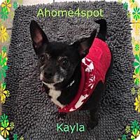 Adopt A Pet :: Kayla - Las Vegas, NV
