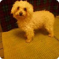 Adopt A Pet :: FANCY - Upper Marlboro, MD