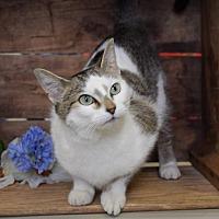 Adopt A Pet :: Star - Germantown, MD