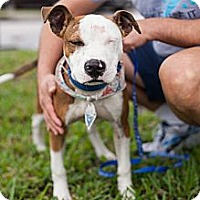 Adopt A Pet :: Bradely - Miami, FL