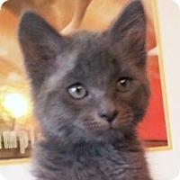 Adopt A Pet :: Jeffrey - Irvine, CA