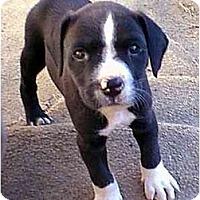 Adopt A Pet :: Jackie - dewey, AZ
