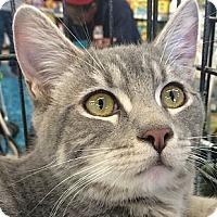 Adopt A Pet :: Darwin - Winchester, CA