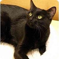 Adopt A Pet :: Harley - Irvine, CA